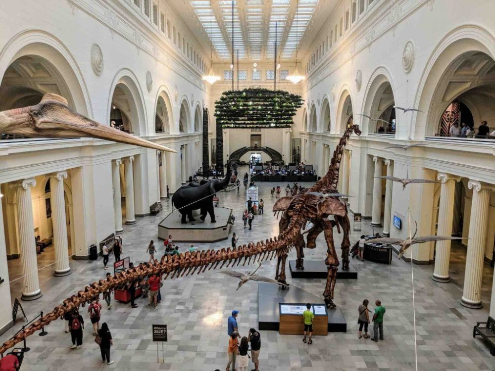 People inside the Field Museum seeing the dinosaurs bones exhibit