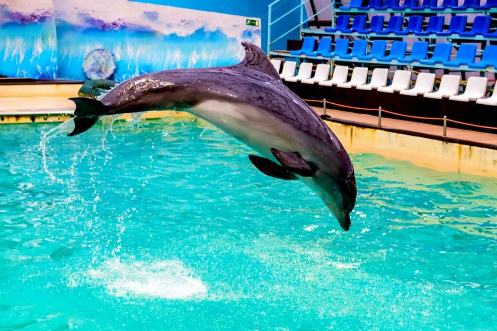 Cute dolphin jumps in pool in dolphinarium | things to do in san antonio