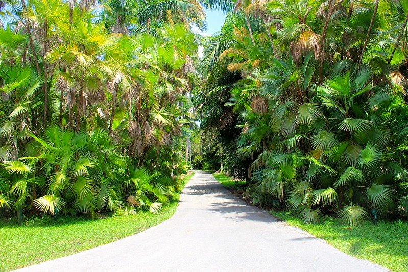 Fairchild Botanical Garden - Palm Trees at Fairchild Botanic Garden | things to do in miami