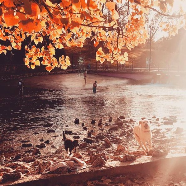 Fall-feels at Zilker Park | best things to do in Austin