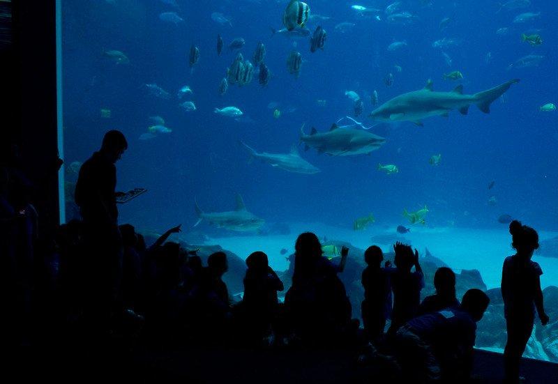 Georgia Aquarium | best things to do in atlanta
