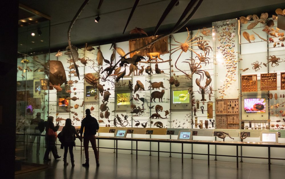 Hall of biodiversity at the American museum of Natural History | things to do in nyc