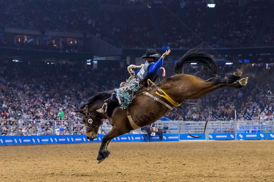 Horse riding show at Houston Livestock Show and Rodeo | things to do in houston
