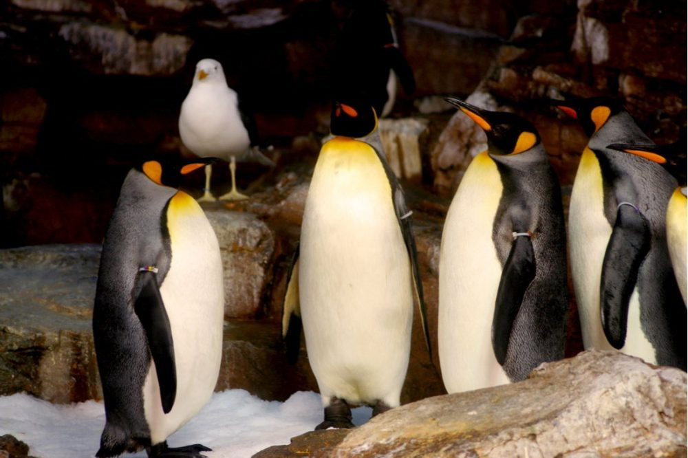 Penguin Meeting at Sea World | things to do in san antonio