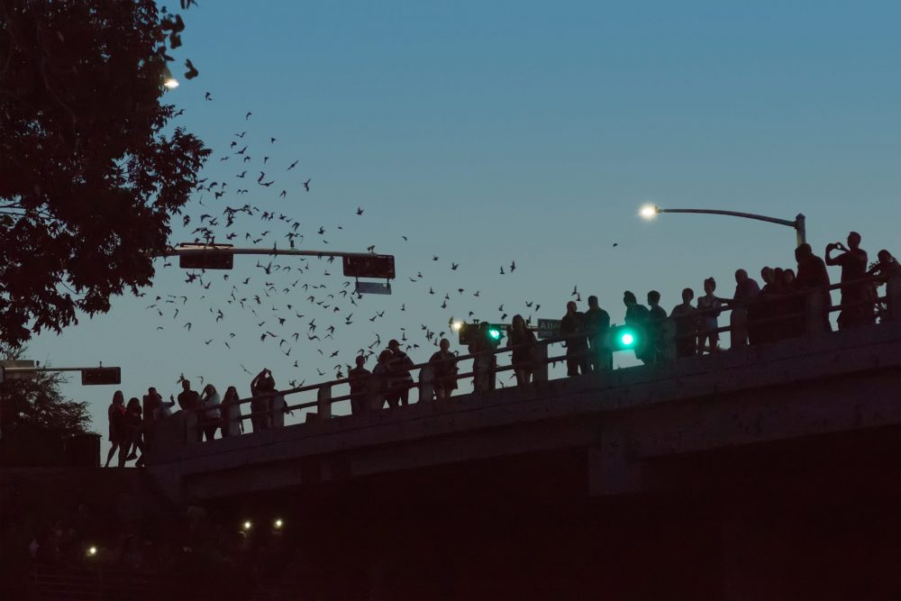 People on the bridge watching the flight of thousands of bats | things to do in houston