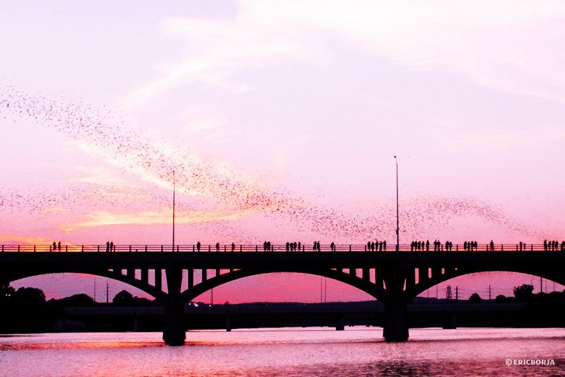 Perfect photo of Congress Avenue Bridge | best things to do in Austin