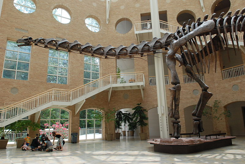 Scenic view at Fernbank Museum of Natural History | best things to do in atlanta