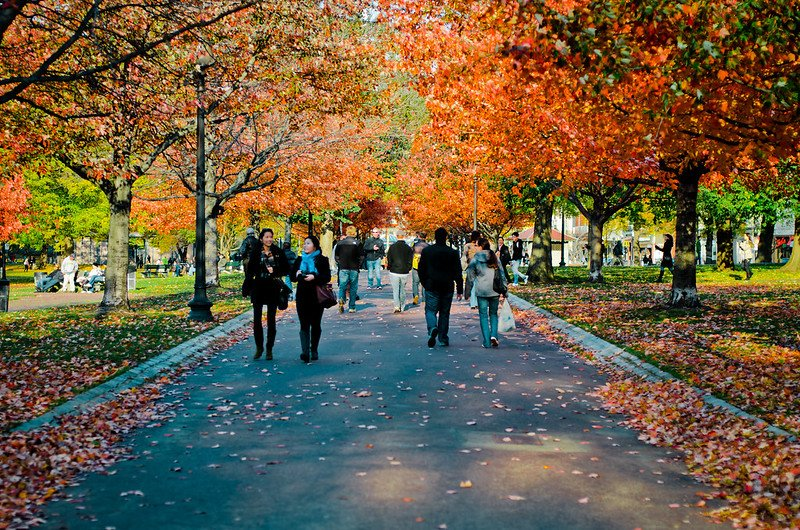 The famous Boston Common   best things to do in boston