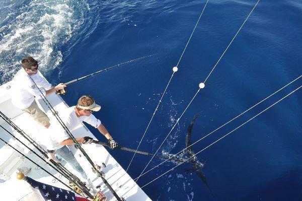 Therapy-IV - Sailfish caught aboard the Therapy-IV Deep Sea Fishing | things to do in miami