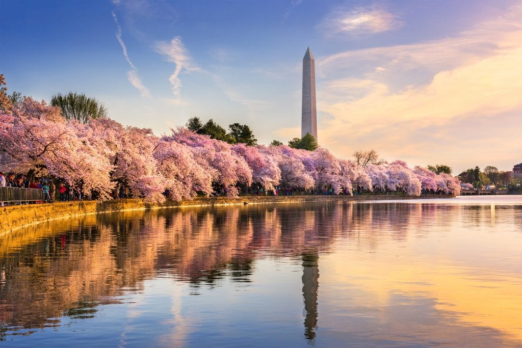 Tidal Basin with Washington Monument | Best thing to do in Washington D.C