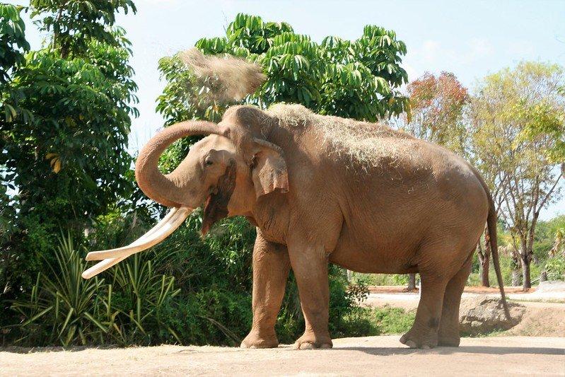 Zoo Miami - Photo of Elephant at the Zoo Miami USA | things to do in miami