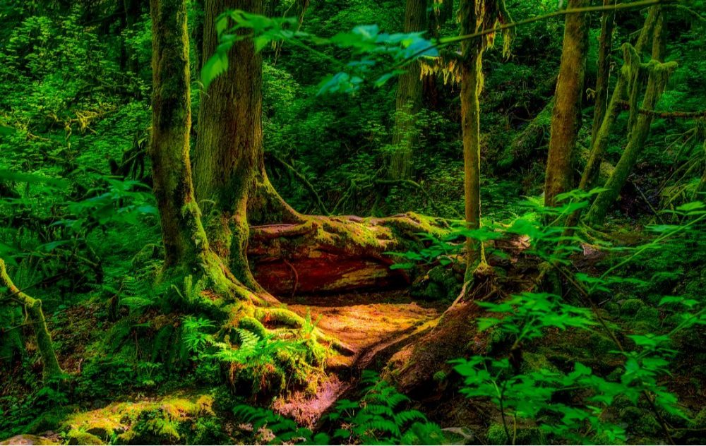 A shady enchanting scene found in the forest while hking in Forest Park, Portland | things to do in portland