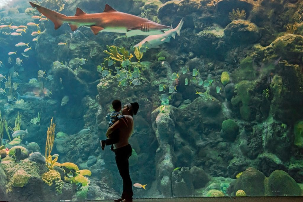 Florida Aquarium in Tampa City | best things to do in tampa