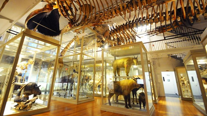 Harvard Museum of Natural History | best things to do in boston