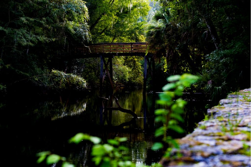 Hillsborough River State Park | best things to do in tampa
