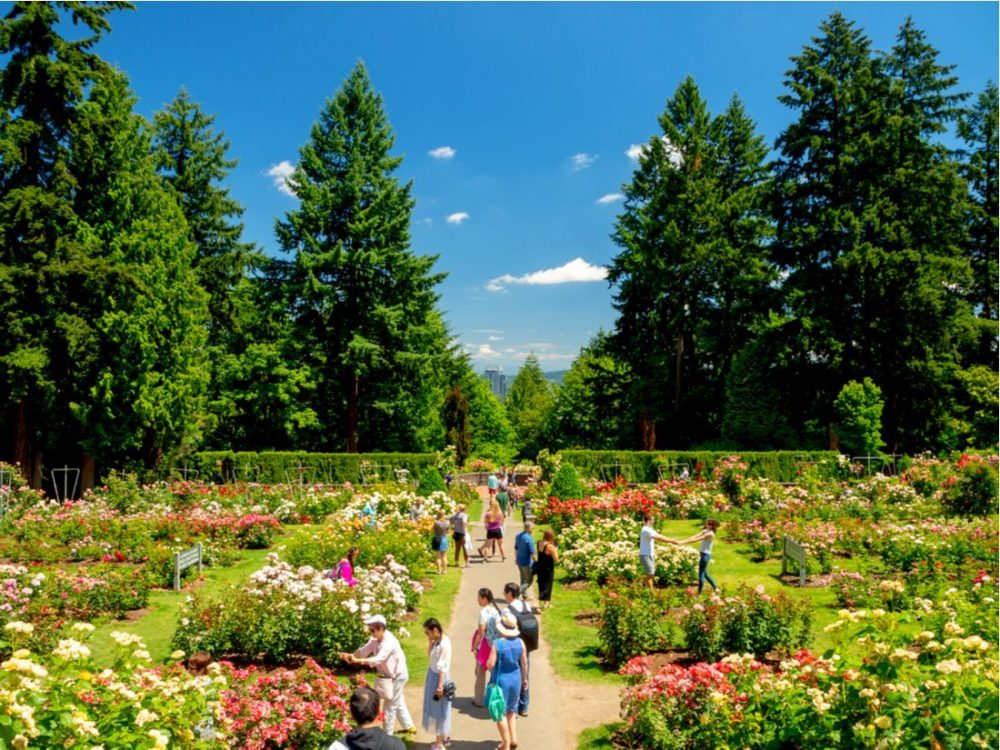 International Rose Test Garden in Portland | things to do in portland