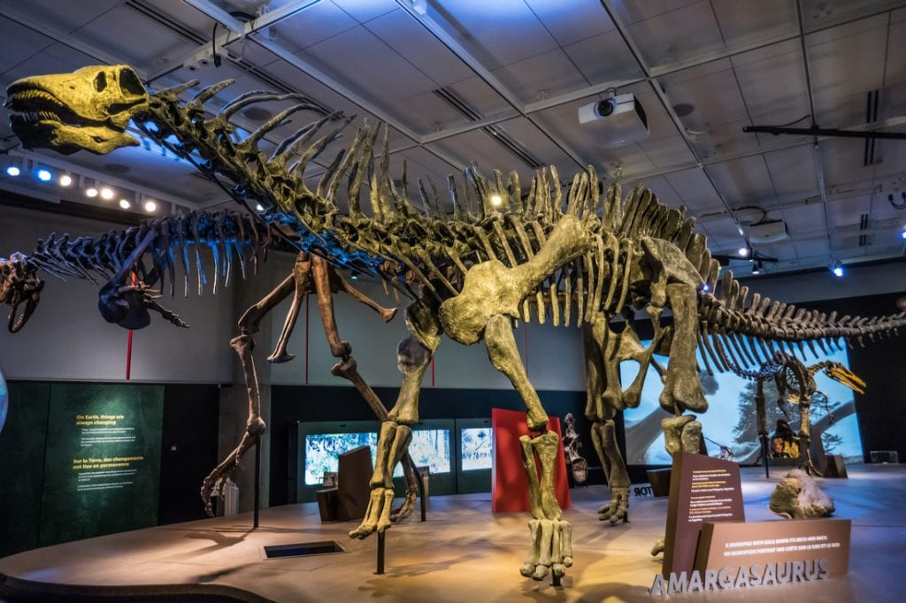 Skeleton of Amargasaurus at The Perot Museum of Nature and Science | best things to do in dallas
