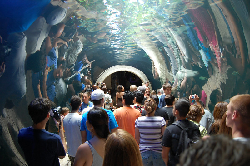Water Tunnel at Dallas World Aquarium | best things to do in dallas