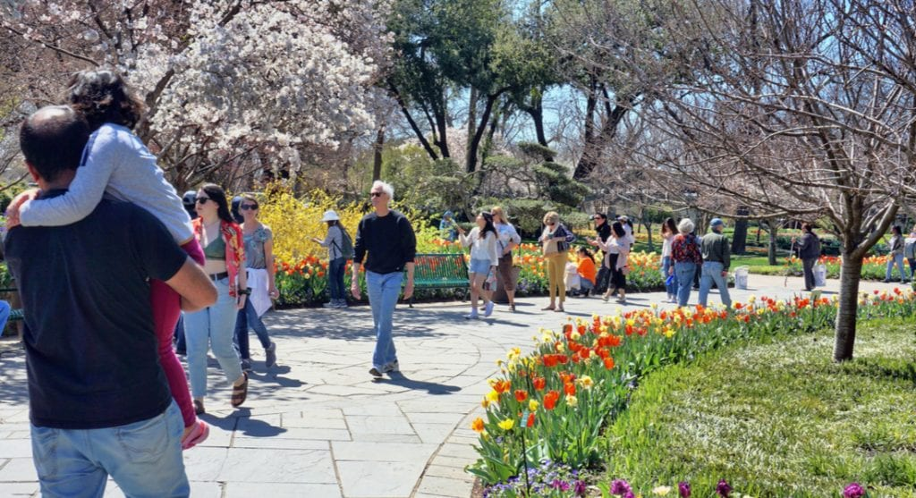 Young families on a nice day in Spring exploring the Dallas Arboretum Garden | best things to do in dallas