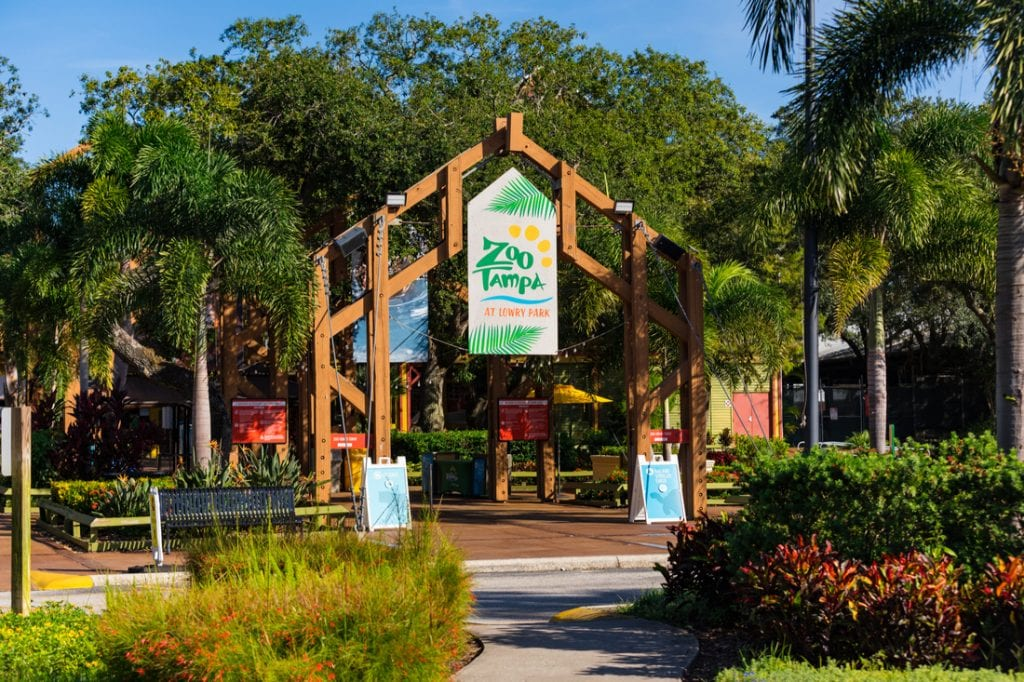 ZooTampa at Lowry's Park | best things to do in tampa