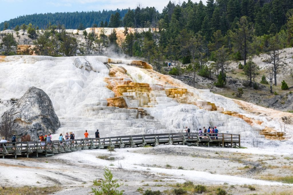Tourists visiting Palette Spring Terrace at Mammoth Hot Springs in Yellowstone National Park | best things to do in yellowstone