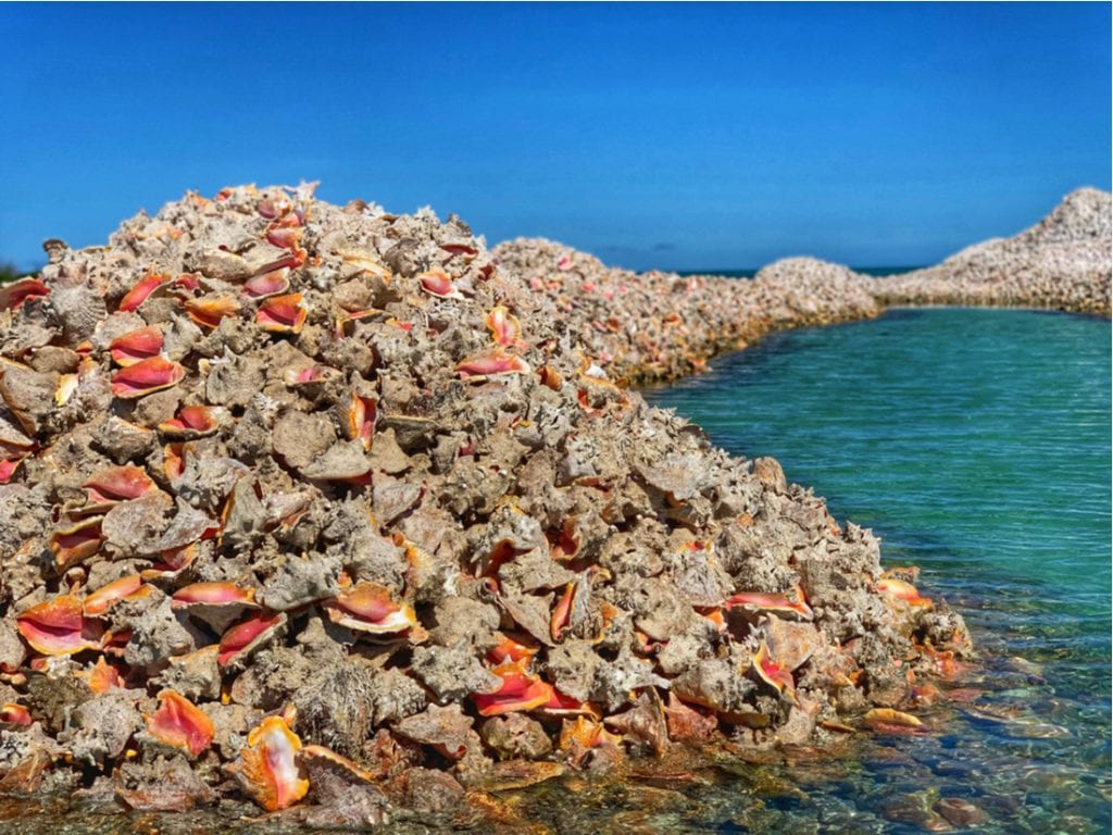 Anegada Conch Shell Mounds | best things to do in BVI
