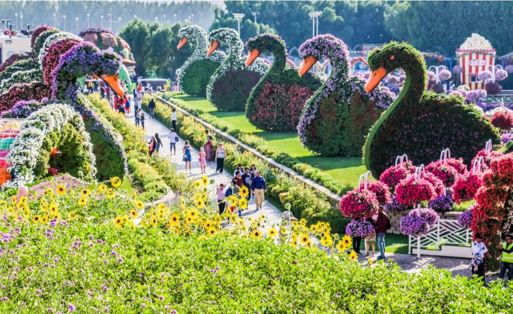 Beautiful Flourish Duck and Flower Landscape Miracle Flower Garden with over 45 million flowers in a sunny day | best things to do in dubai