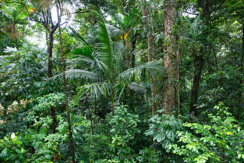 Edmund Forest Reserve | things to do in st. lucia