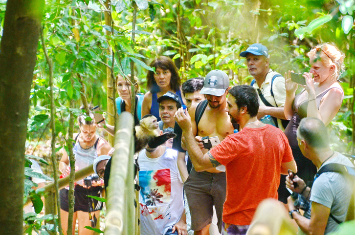 Tourists take pictures of Capuchin monkeys at Manuel Antonio National Park | things to do in  costa rica