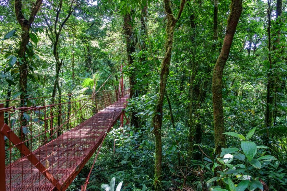 bridge-in-rainforest-of-monteverde | things to do in costa rica